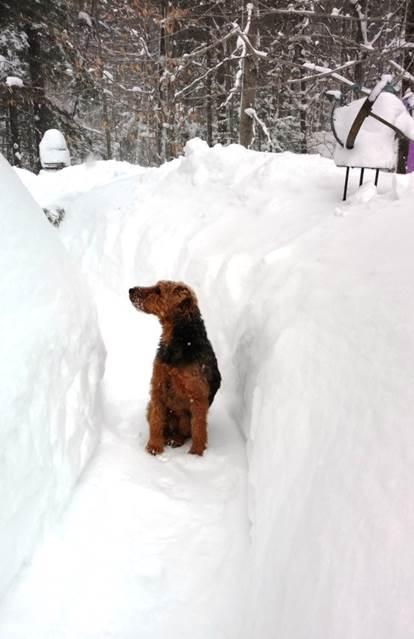 finn-from-maine-dan-lamberts-puppy